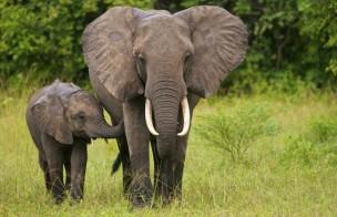 象とガンリスク